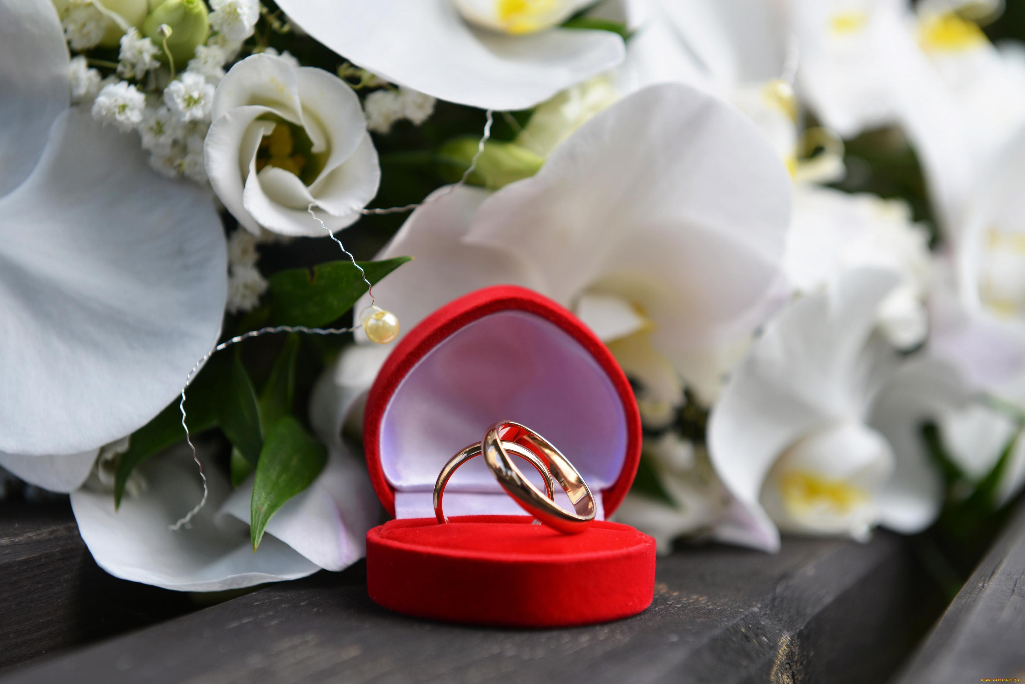Обручальные кольца для открытки
